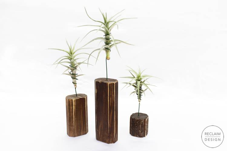 Sustainable reclaimed wood air plant display stands   Reclaim Design
