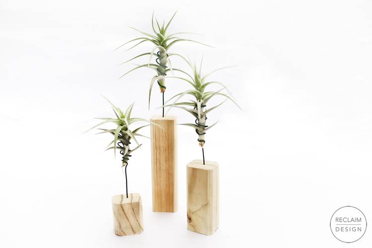 Reclaimed Wood Air Plant Stands | Reclaim Design