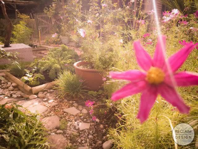 Increased biodiversity in our garden | Reclaim Design