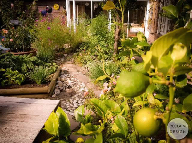 If life gives you lemons…. Our productive food garden | Reclaim Design