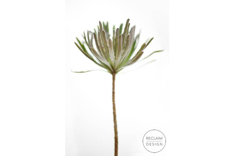 Botanical Fine Art Prints | Reclaim Design