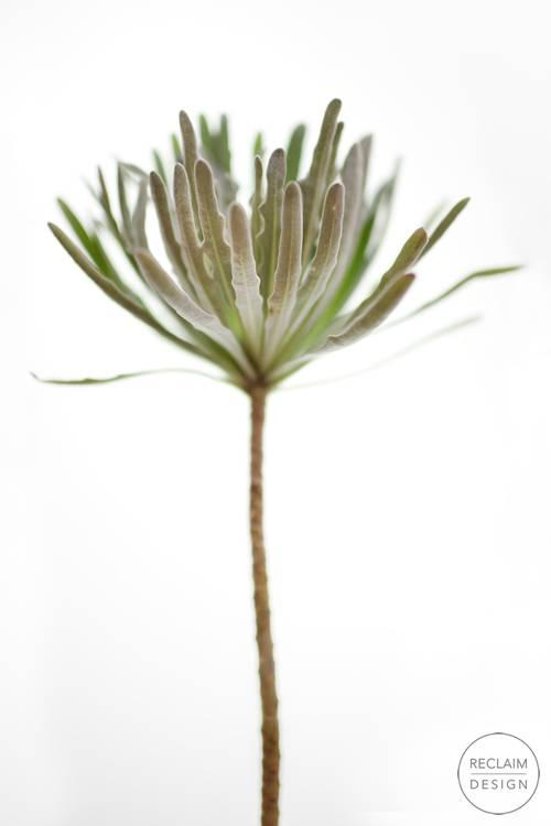 Botanical Fine Art Print - Milkweed | Reclaim Design
