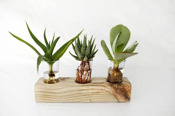 Sustainable Gift Ideas - Reclaimed Wood and Glass Hydroponic Succulent Display | Reclaim Design