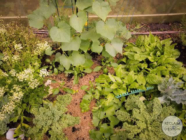 Food gardens can be beautiful as well as practical, like ours! | Reclaim Design