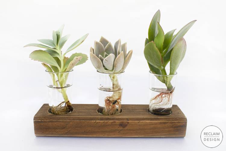 Reclaimed Wood and Glass Hydroponic Succulent Displays | Reclaim Design