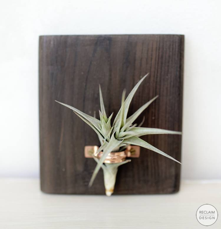 Sustainable Air Plant Display Made From Reclaimed Wood | Reclaim Design