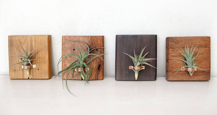 Sustainable reclaimed wood air plant - green decor | Reclaim Design