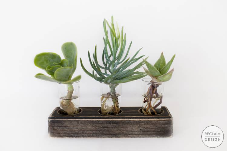 Sustainable Gift Ideas - Succulent Display With Reclaimed Wood Stand | Reclaim Design